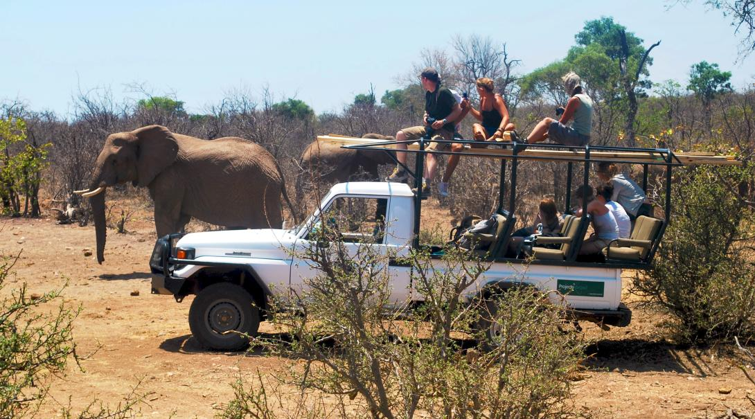 Volunteers in Africa observing elephants in the wild